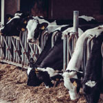 Dairy Cooling from BV Thermal Systems