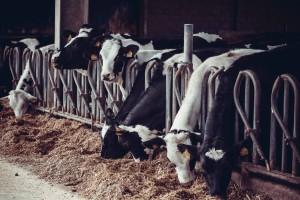 Dairy, Dairies
